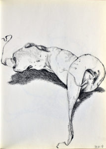 Tekeningen en illustraties