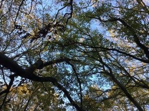 Treerubbing in het Rijsterbos